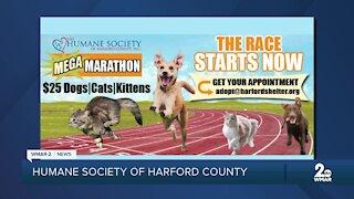 Adoption fees at $25 at the Humane Society of Harford County
