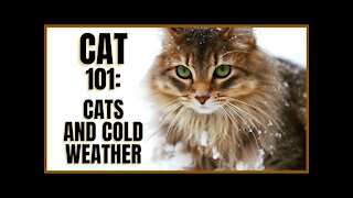 Cats and Cold Weather
