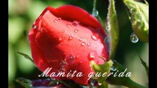 Amor De Mi Madre - Canción del día de las Madres