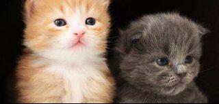 A cute little street cat