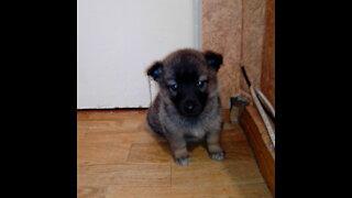 We have a dog named Belka.