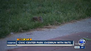 Denver sees an uptick in rat-related complaints at Civic Center Park
