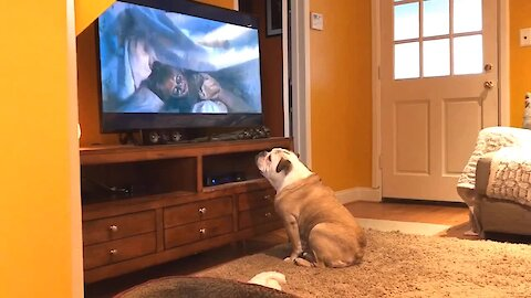 Bulldog delivers incredible reaction to scary movie trailer