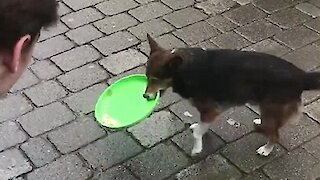 Busking Dog Helps Collect Donations For Its Owner