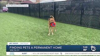 ABC 10News Pet of the Week: Travis