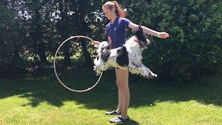Amazing dog jumps through hula hoop