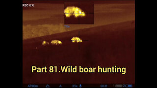 Part 81. Wildboar hunting, pulsar thermion xq50