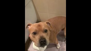 Pup helps fetch toilet paper for owner