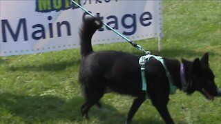 Lake Humane Society holds 27th annual Mutt Strut dog adoption event