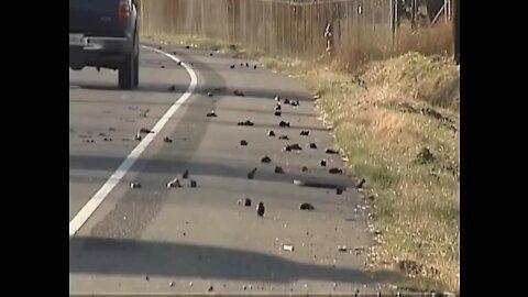 Holandsko: 100-ky mŕtvych vtákov padlo z oblohy počas testu 5G