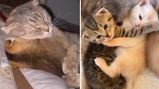 Compilation of kitten best friends cuddling each other