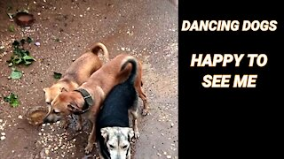 DANCING DOG'S TAILS