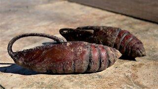 Bizarre & ferocious looking caterpillar emerges as gigantic & beautiful moth