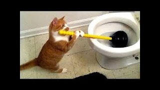 Hilarious Animals like never before   Must watch