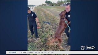 Police help save dogs life in Port St. Lucie