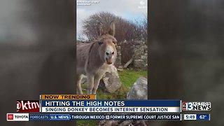 Singing donkey becomes internet sensation