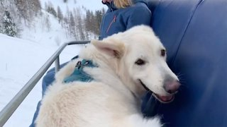 Daredevil dog loves skiing with owners and even rides on ski lifts