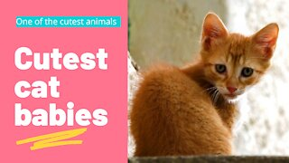 Cutest cat babies