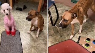 Shameful dogs guilty of eating a whole pound of beef