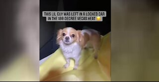 Las Vegas police officers rescue dog from hot car, share video