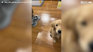 Adorable puppy learns to whisper
