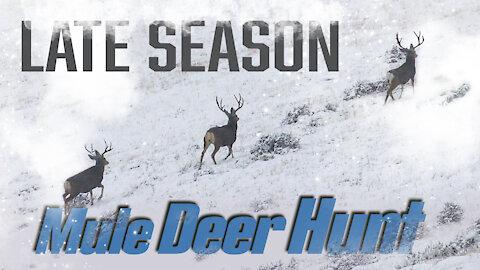Hunting for Giant Mule Deer