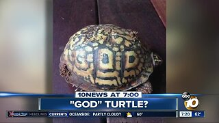"""Picture shows """"God"""" turtle?"""