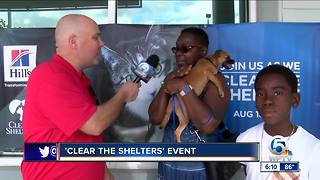 """""""Clear the Shelters"""" animal adoption event held on Saturday"""