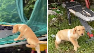 Puppy desperately wants to join kids on the trampoline