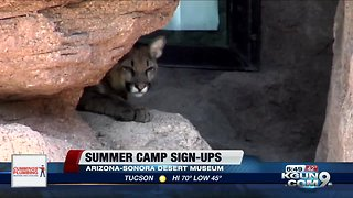 Summer camps for all ages offered at the Desert Museum