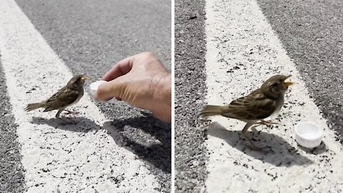 Biker rescues dehydrated bird on side of the road
