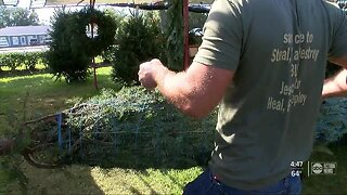 Christmas trees helping addicts recover