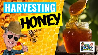 The Secret Lives of Bees I Part 3 – BIRTH OF A BEE & HARVESTING HONEY
