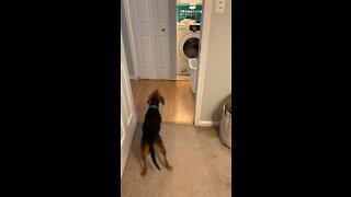 Albert Scared of Washing Machine