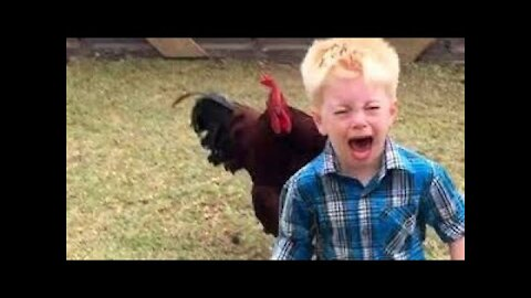 Funny chickens roosters Chasing kids