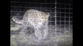 Pittsburgh Zoo 2004