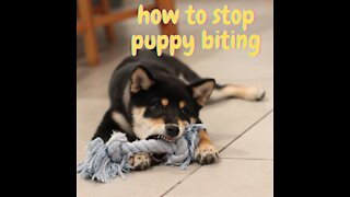 How to prevent puppies from biting?
