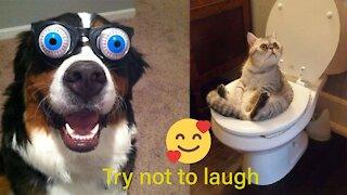Funny Videos Animals Pets 2021