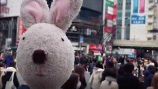Bunny rabbit hops around the world