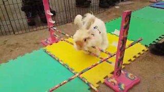 Coniglio si rifiuta di seguire le regole della gara!