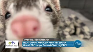 Support Animals In Need! // CO Gives Day & Denver Dumb Friends League