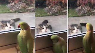 PARROT playing Peek-a-Boo with a CAT