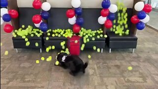 TSA K-9 sent into retirement with tennis ball surprise