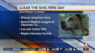 Local pet shelters to participate in Clear The Shelters Day