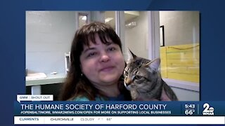 """Humane Society of Harford County says """"We're Open Baltimore!"""""""