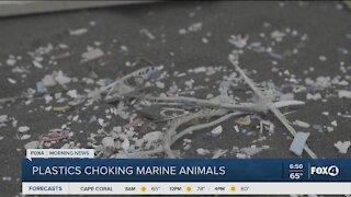 Marine animals being chocked by plastics