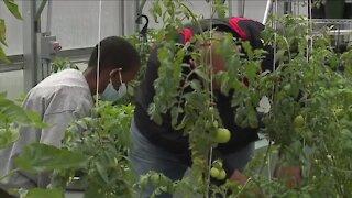 Middle School greenhouse program giving back
