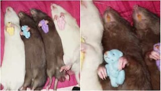 Bedårende mus sover med bamser