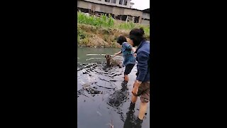 Dog rescued from muddy worm-infested water