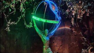 Rainforest Cafe: Best Jungle Cafe In Arizona